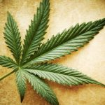Marihuana y Judaismo